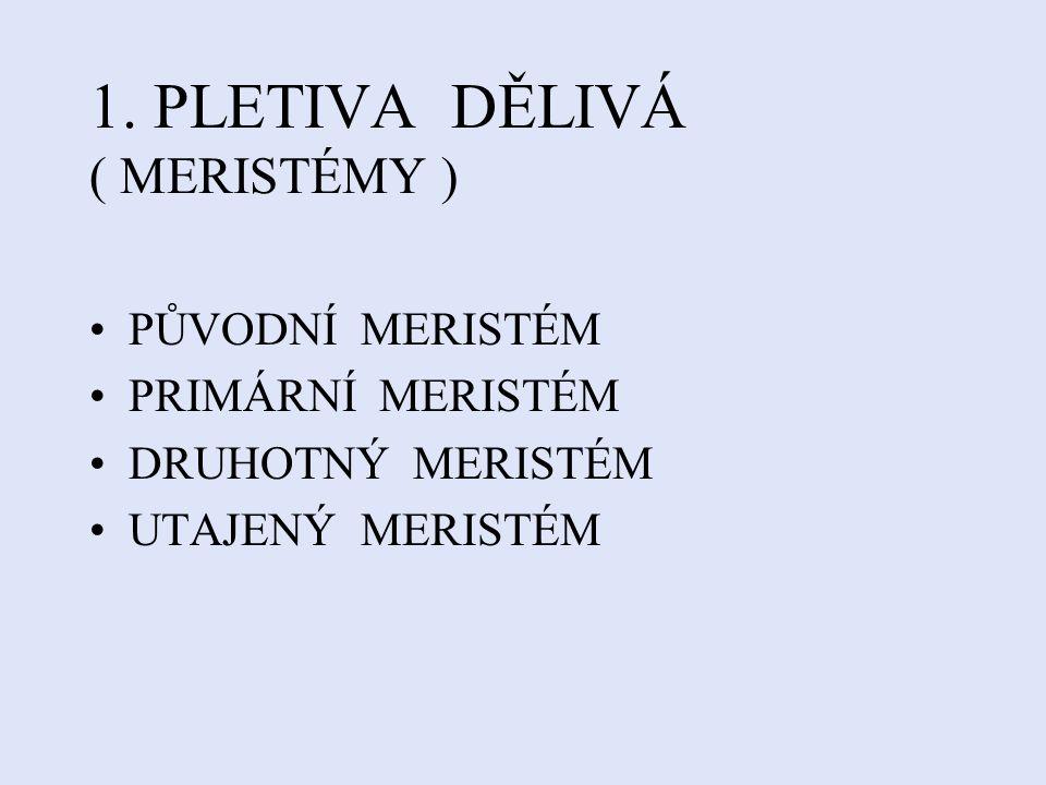 1. PLETIVA DĚLIVÁ ( MERISTÉMY )