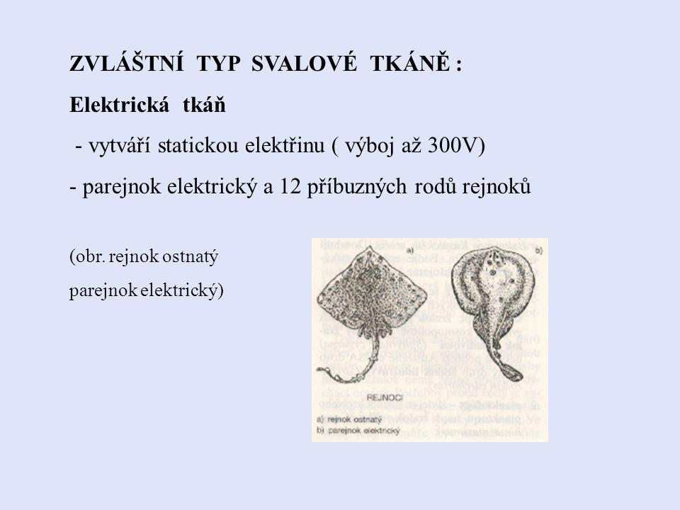 ZVLÁŠTNÍ TYP SVALOVÉ TKÁNĚ : Elektrická tkáň