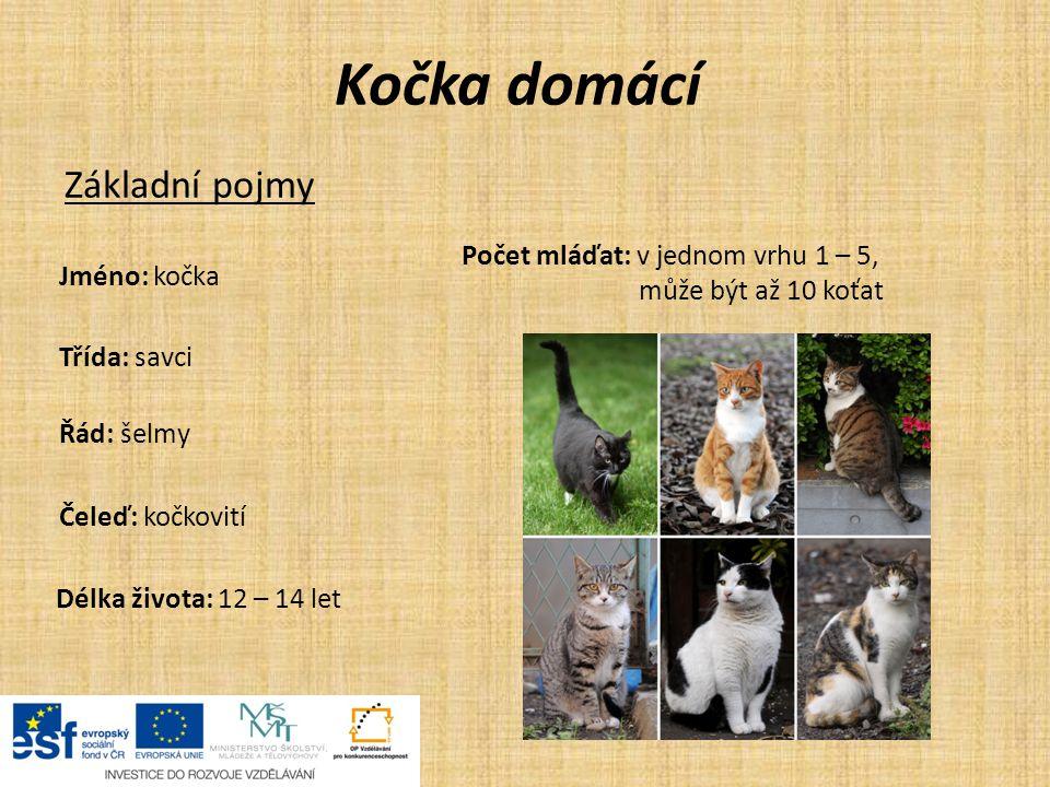Kočka domácí Základní pojmy Počet mláďat: v jednom vrhu 1 – 5,