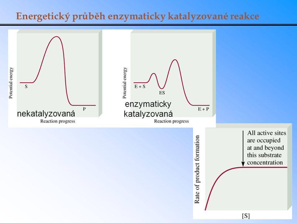 Energetický průběh enzymaticky katalyzované reakce