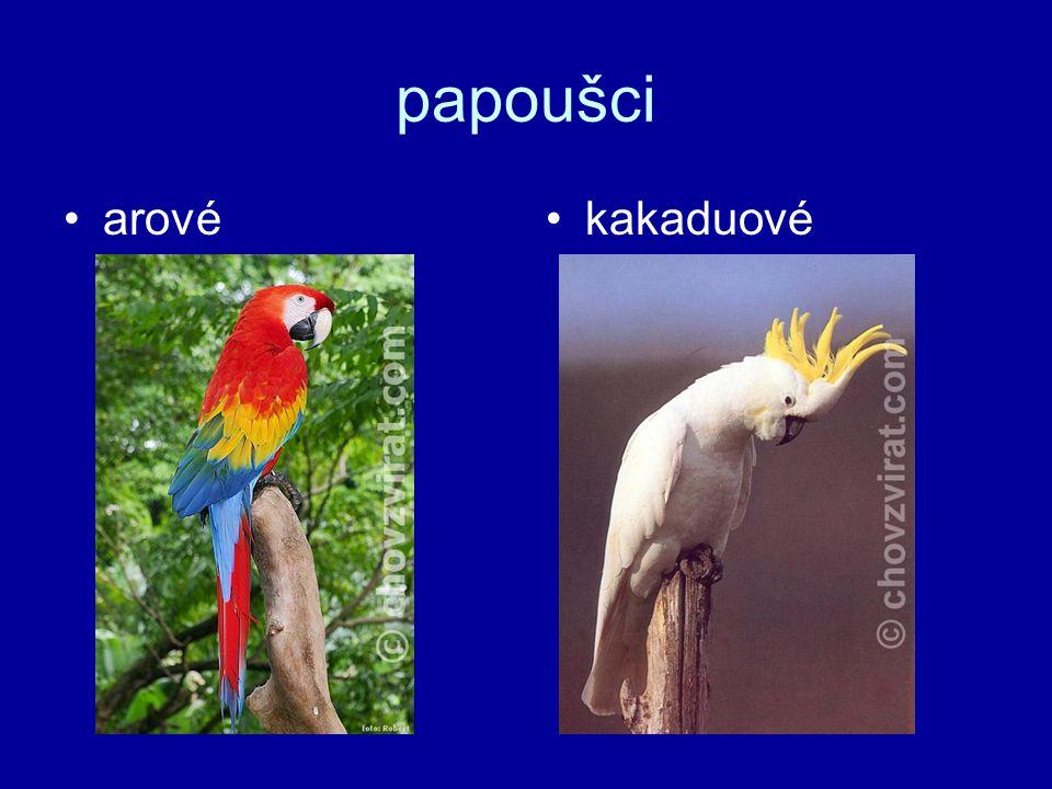 papoušci arové kakaduové