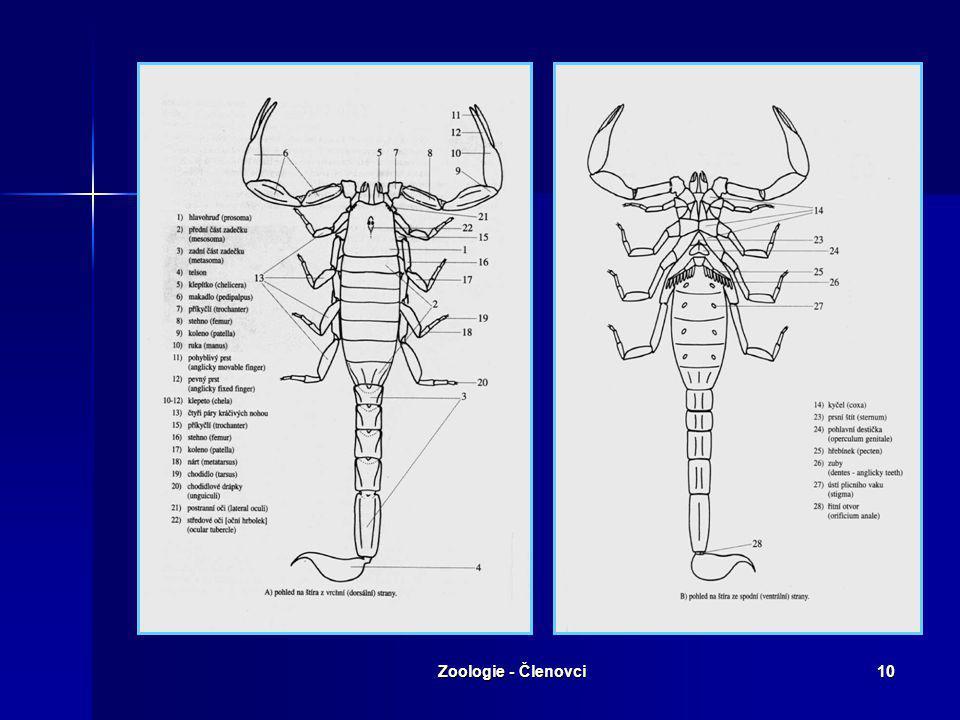 Zoologie - Členovci