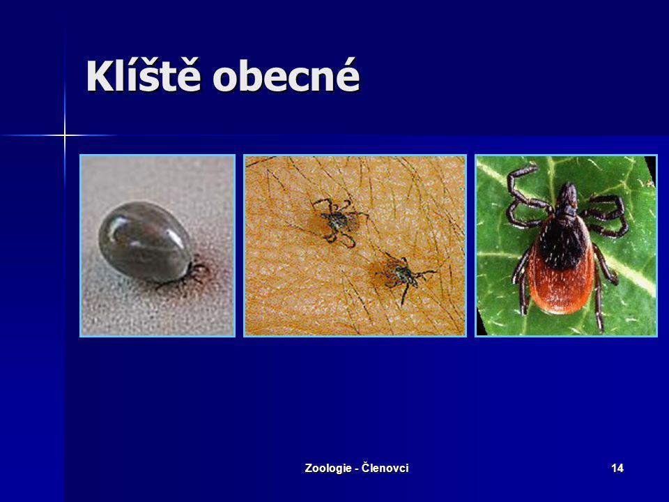 Klíště obecné Zoologie - Členovci