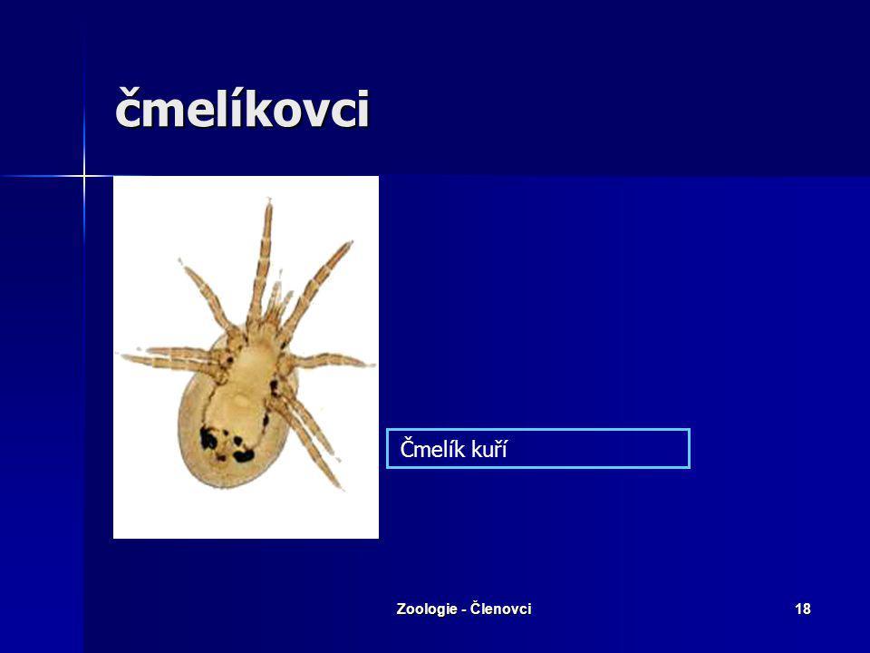 čmelíkovci Čmelík kuří Zoologie - Členovci