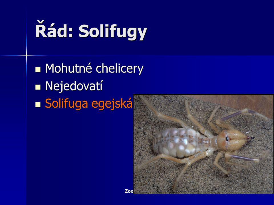 Řád: Solifugy Mohutné chelicery Nejedovatí Solifuga egejská
