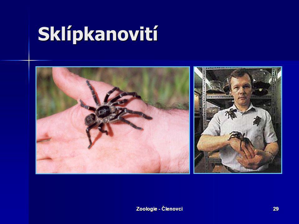 Sklípkanovití Zoologie - Členovci