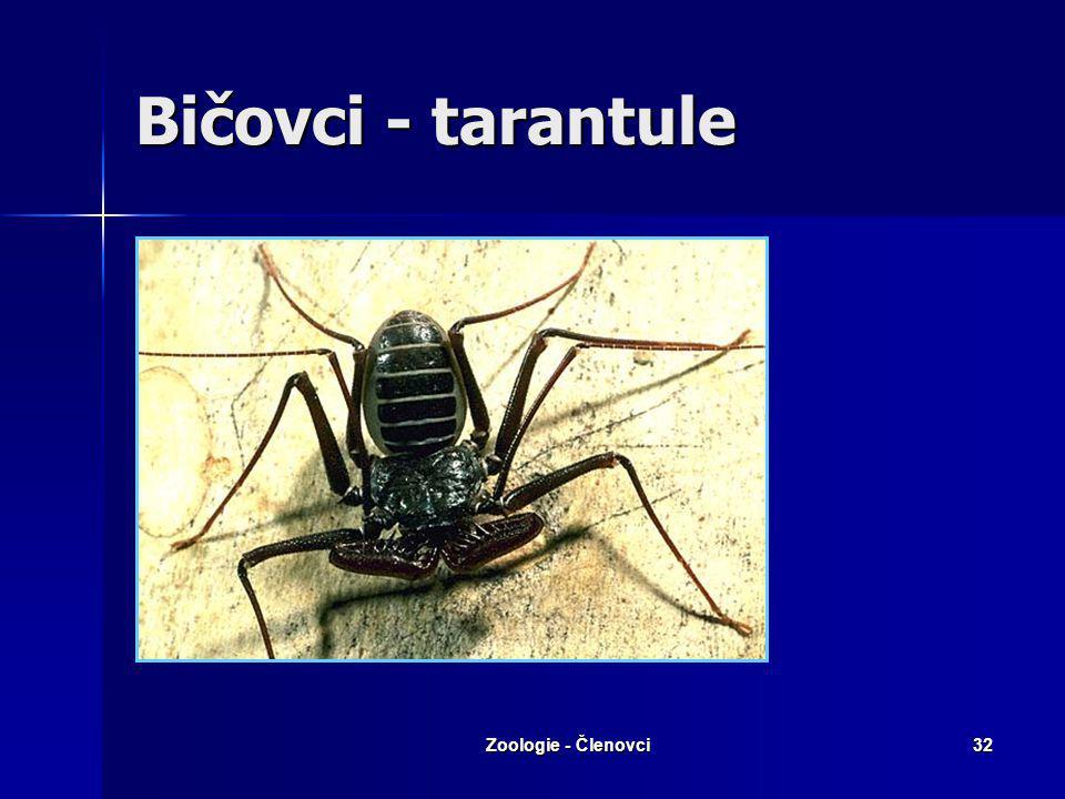 Bičovci - tarantule Zoologie - Členovci