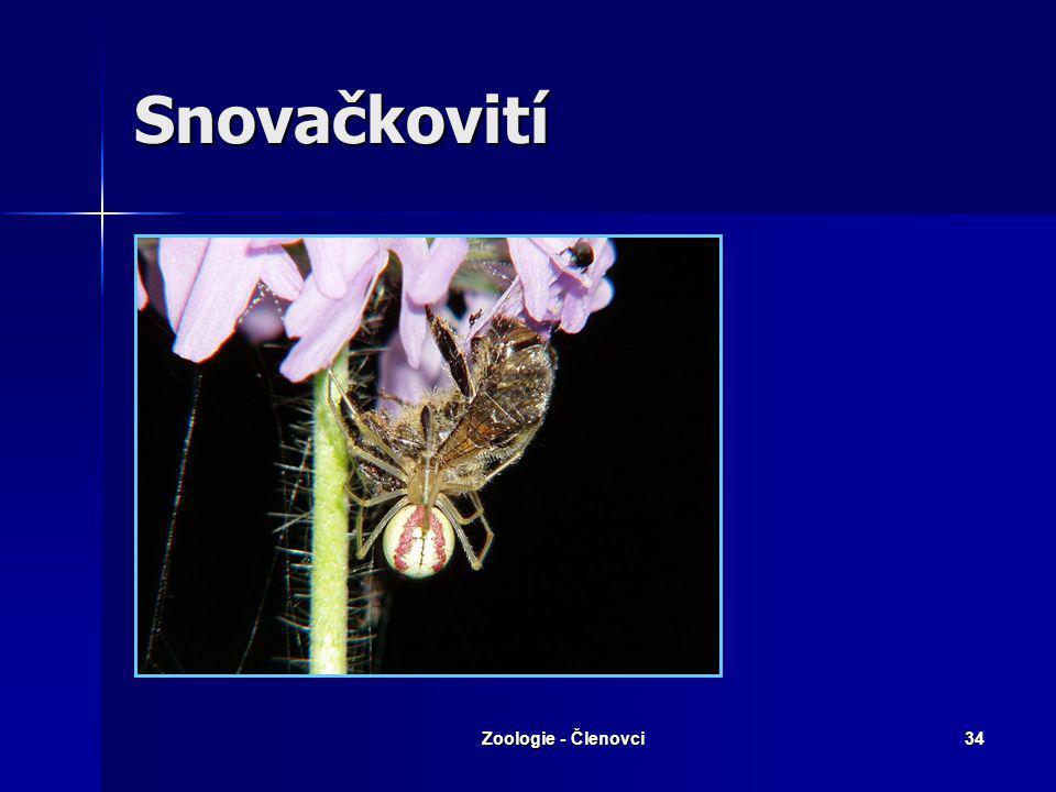 Snovačkovití Zoologie - Členovci