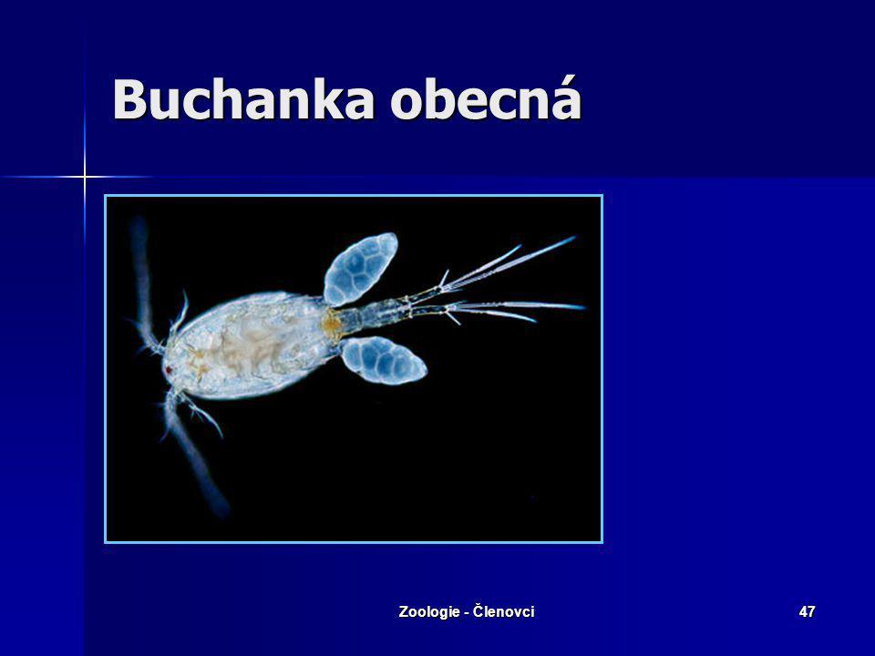 Buchanka obecná Zoologie - Členovci