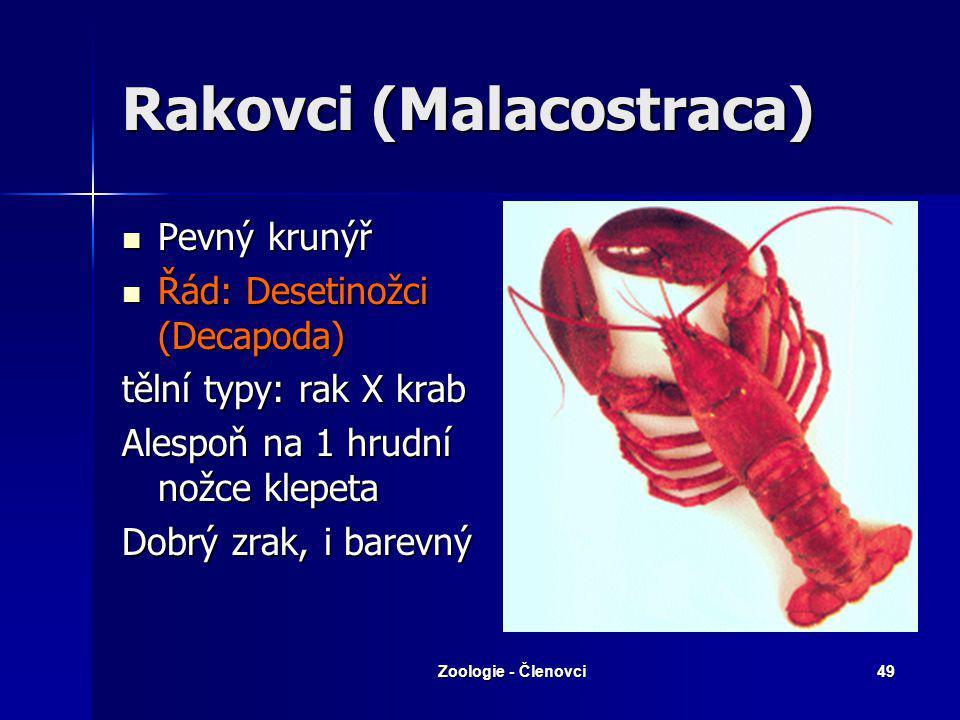Rakovci (Malacostraca)