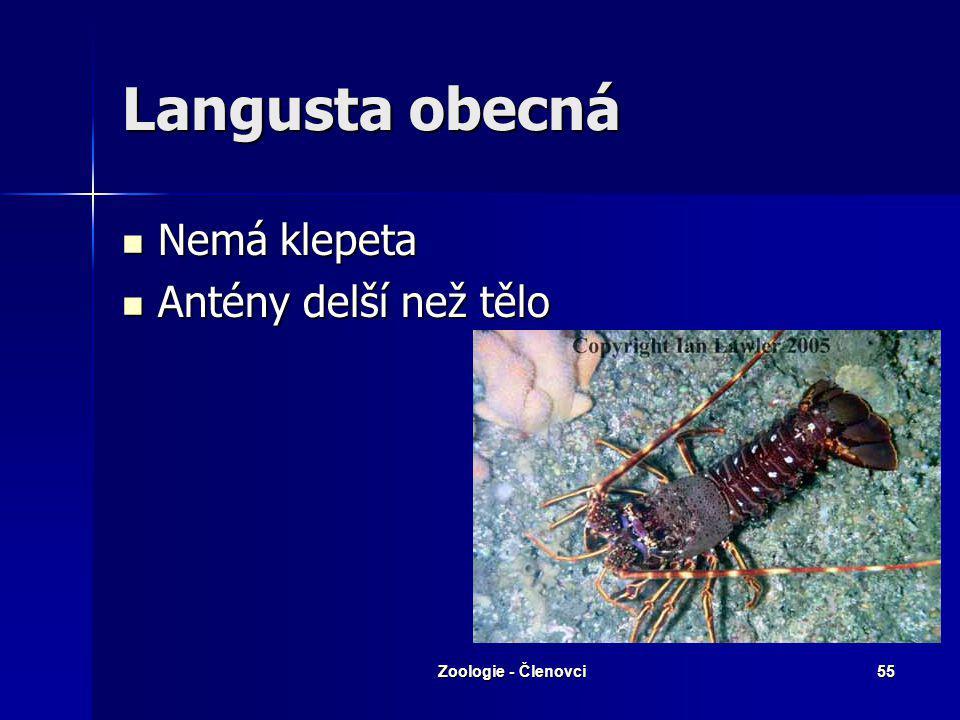 Langusta obecná Nemá klepeta Antény delší než tělo Zoologie - Členovci