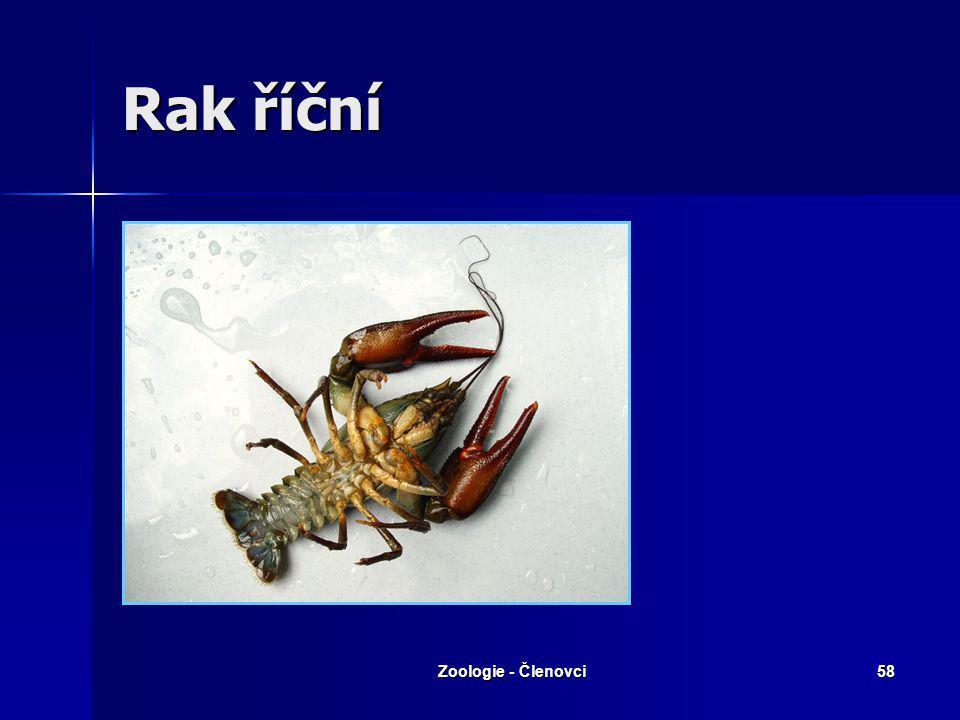 Rak říční Zoologie - Členovci