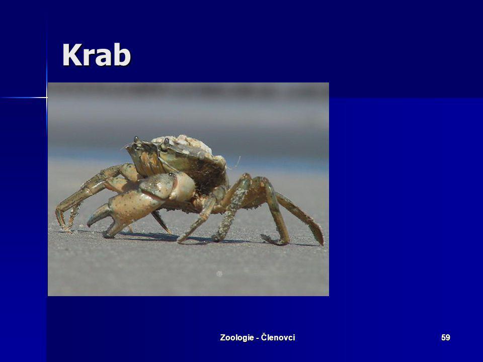 Krab Zoologie - Členovci