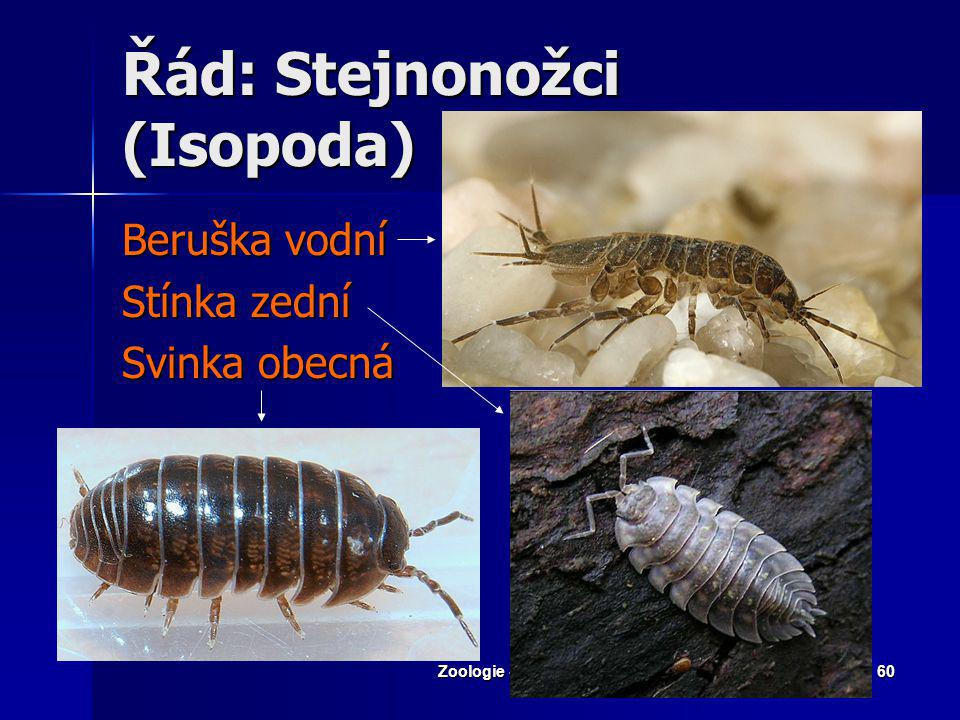 Řád: Stejnonožci (Isopoda)
