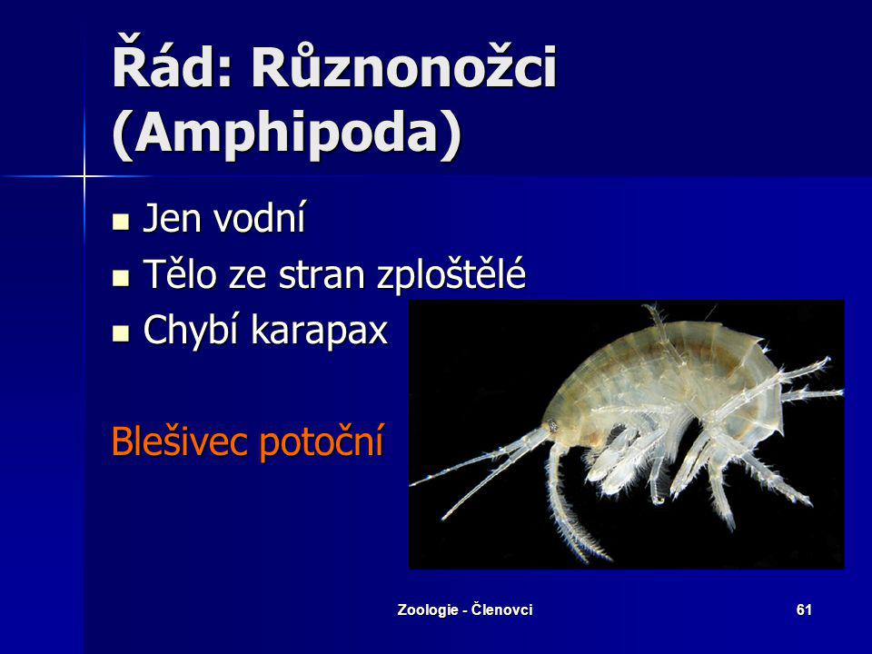 Řád: Různonožci (Amphipoda)