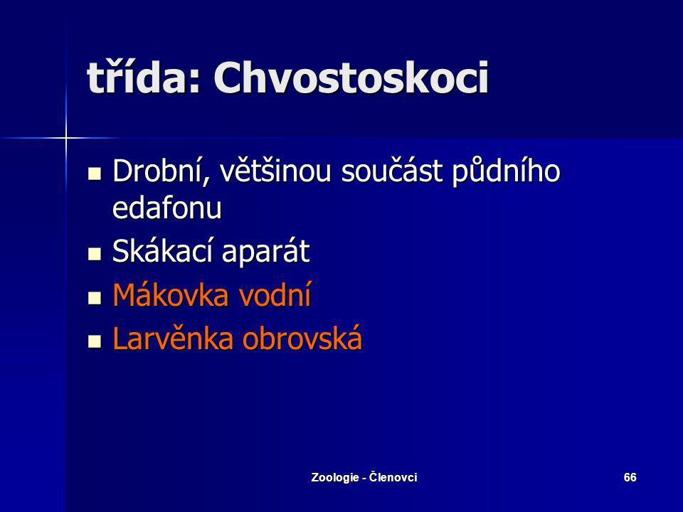třída: Chvostoskoci Drobní, většinou součást půdního edafonu