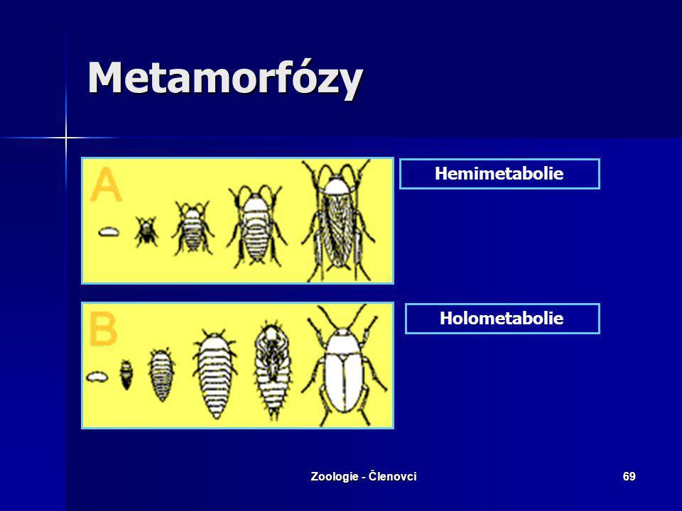 Metamorfózy Hemimetabolie Holometabolie Zoologie - Členovci