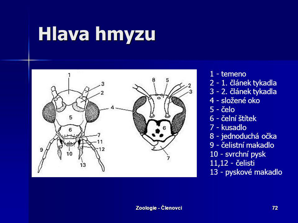 Hlava hmyzu