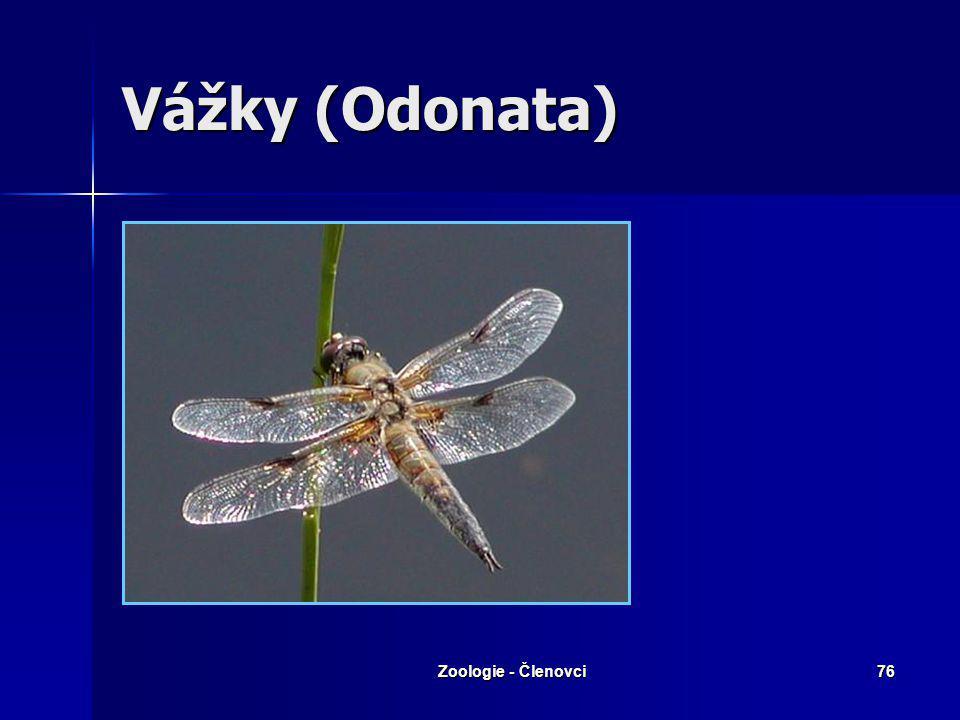 Vážky (Odonata) Zoologie - Členovci