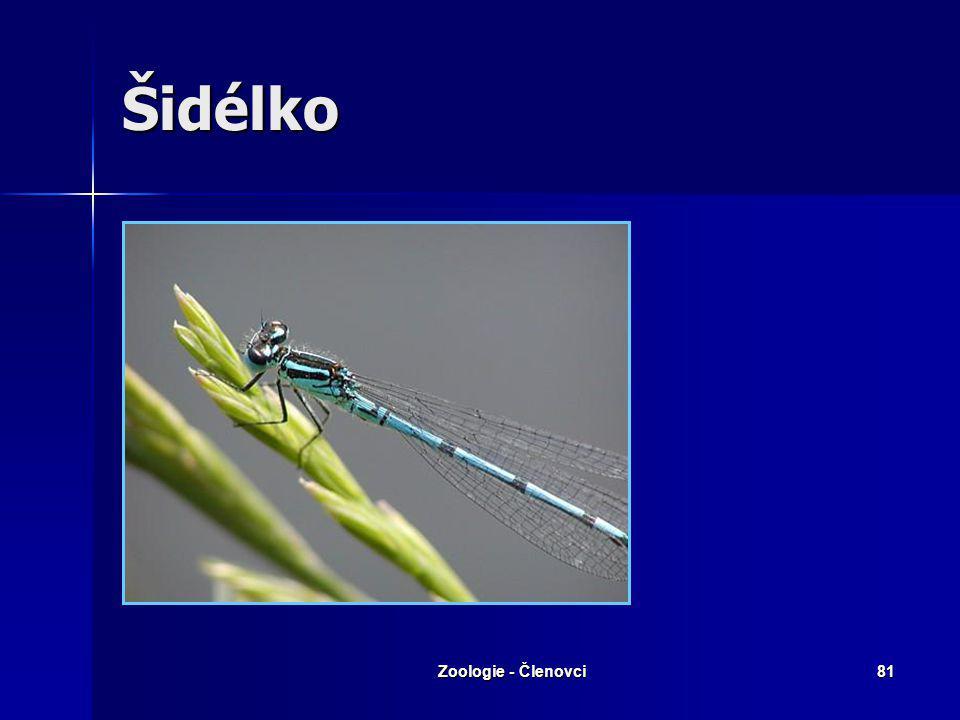 Šidélko Zoologie - Členovci