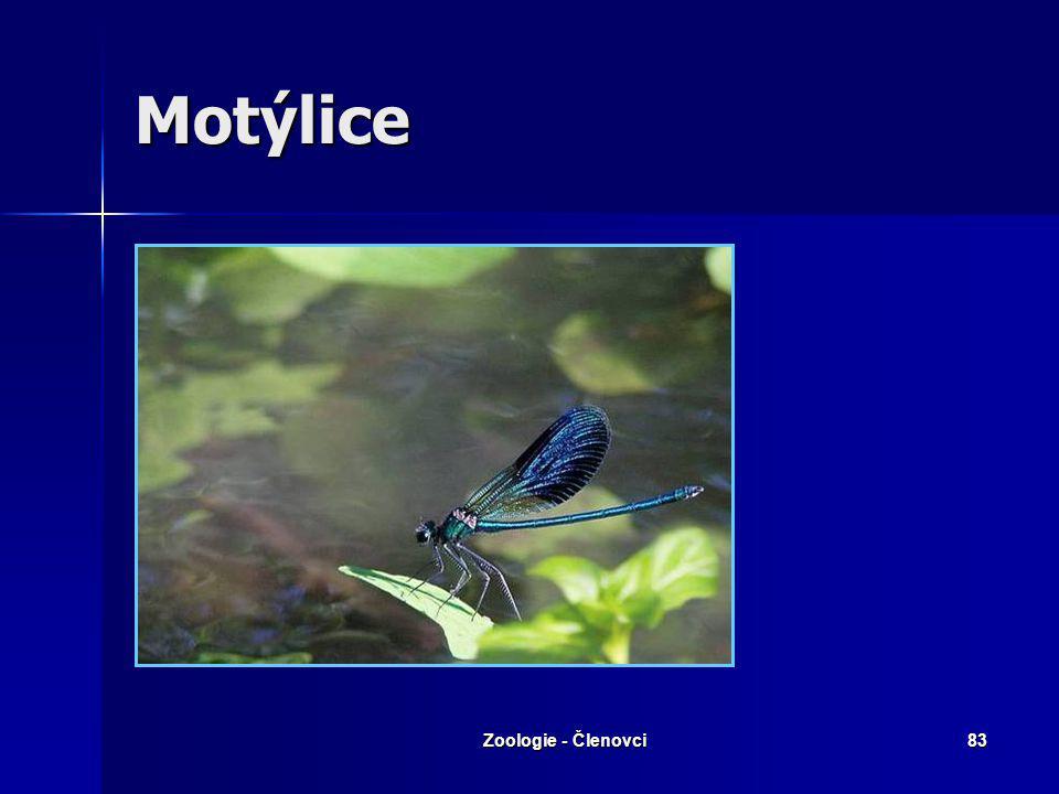 Motýlice Zoologie - Členovci