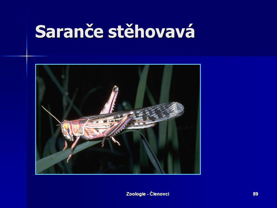 Saranče stěhovavá Zoologie - Členovci