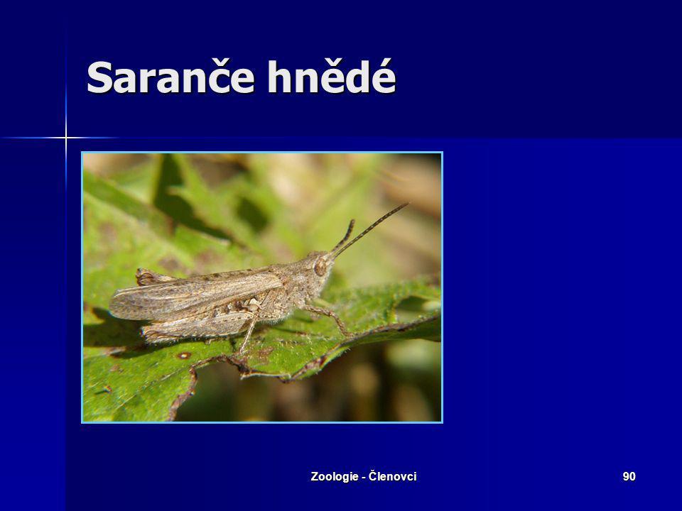 Saranče hnědé Zoologie - Členovci