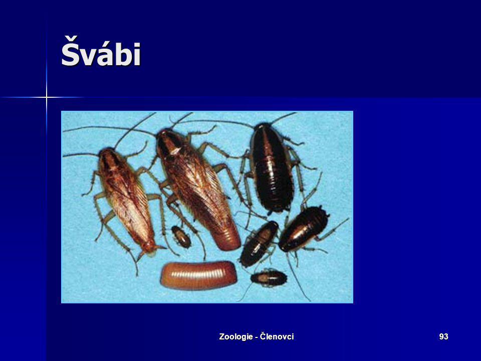 Švábi Zoologie - Členovci