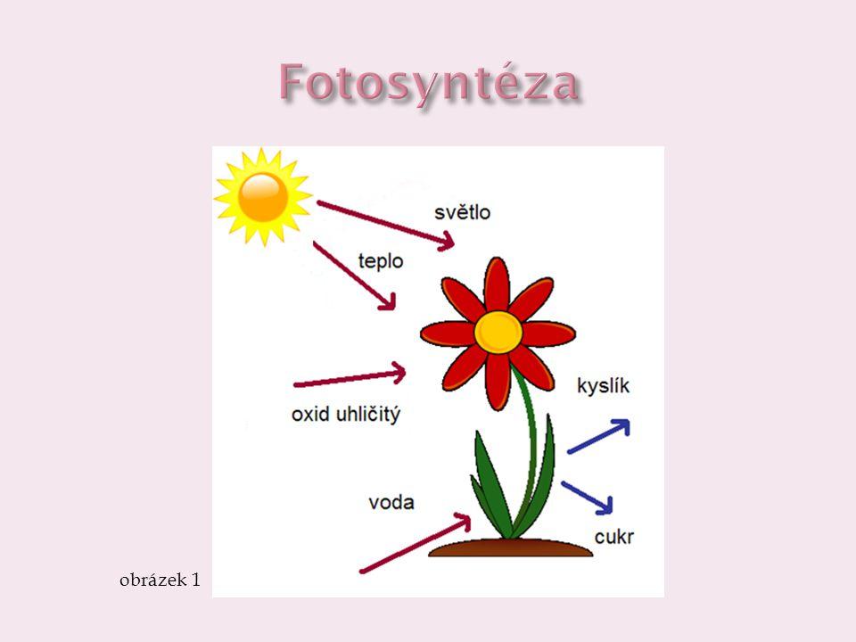 Fotosyntéza obrázek 1