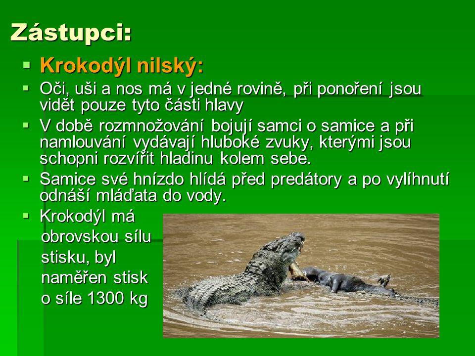 Zástupci: Krokodýl nilský: