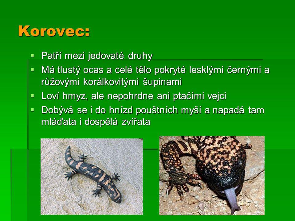 Korovec: Patří mezi jedovaté druhy