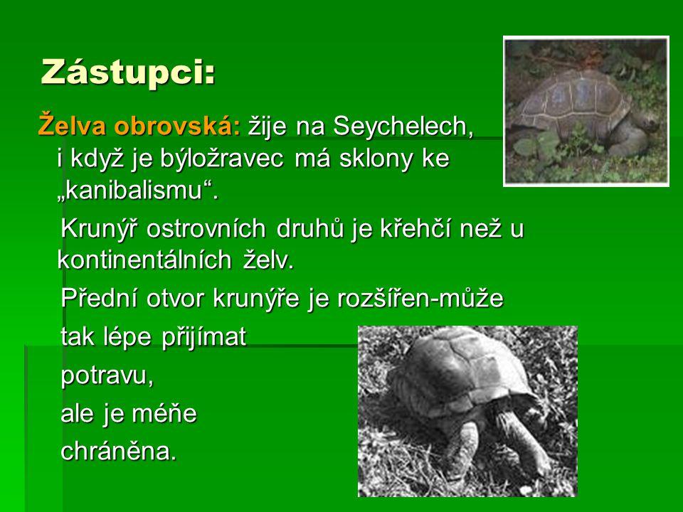"""Zástupci: Želva obrovská: žije na Seychelech, i když je býložravec má sklony ke """"kanibalismu ."""