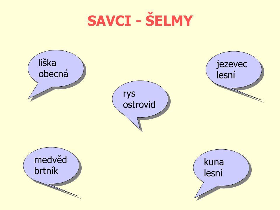 SAVCI - ŠELMY liška jezevec obecná lesní rys ostrovid medvěd kuna