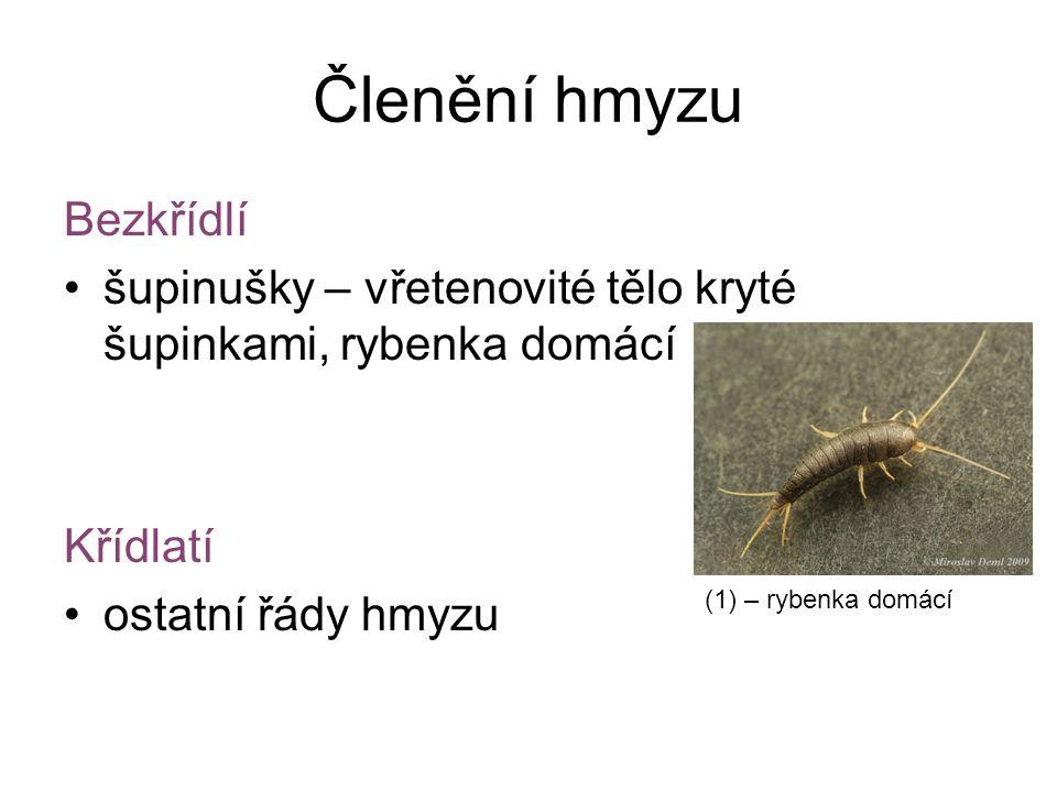 Členění hmyzu Bezkřídlí