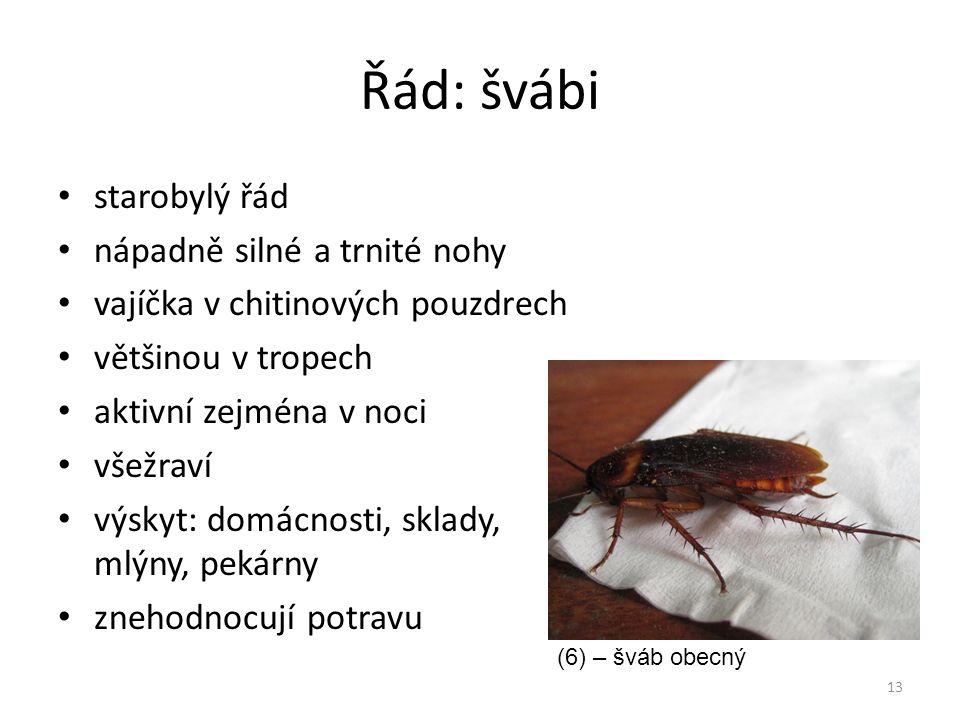 Řád: švábi starobylý řád nápadně silné a trnité nohy