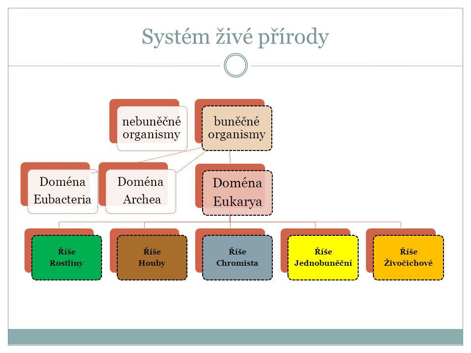 Systém živé přírody Eukarya Doména Eubacteria nebuněčné organismy