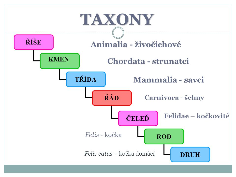 TAXONY Animalia - živočichové Chordata - strunatci Mammalia - savci