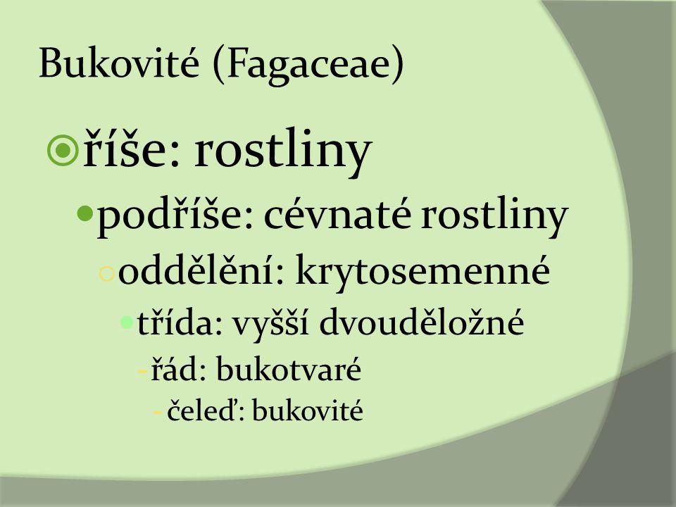 říše: rostliny podříše: cévnaté rostliny Bukovité (Fagaceae)