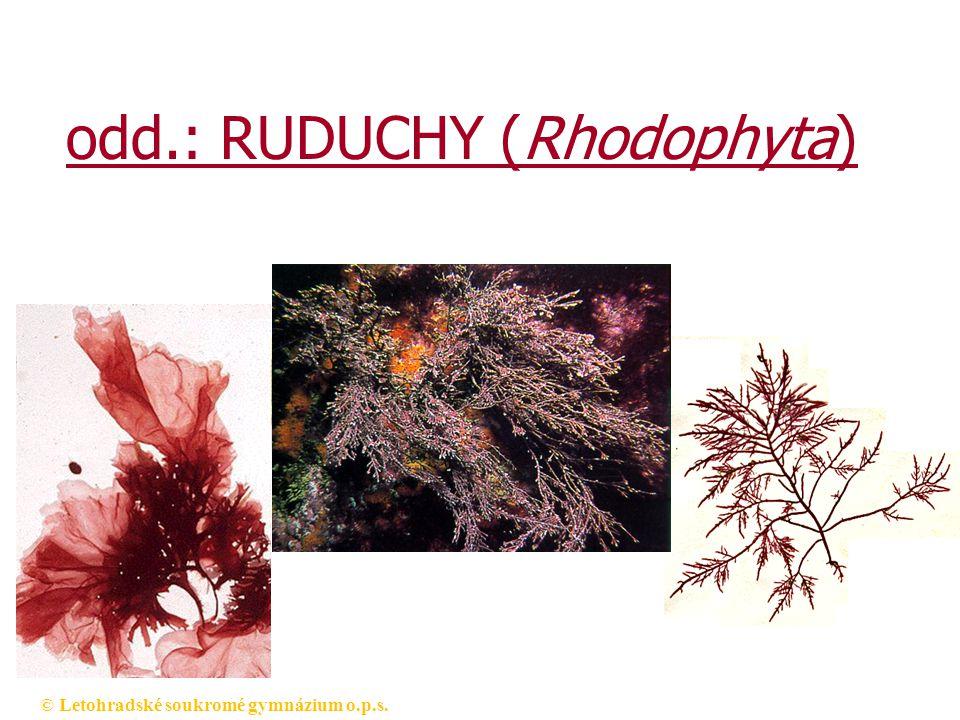 odd.: RUDUCHY (Rhodophyta)