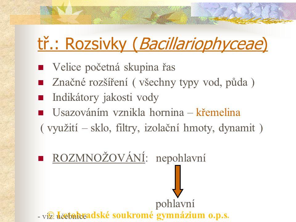 tř.: Rozsivky (Bacillariophyceae)