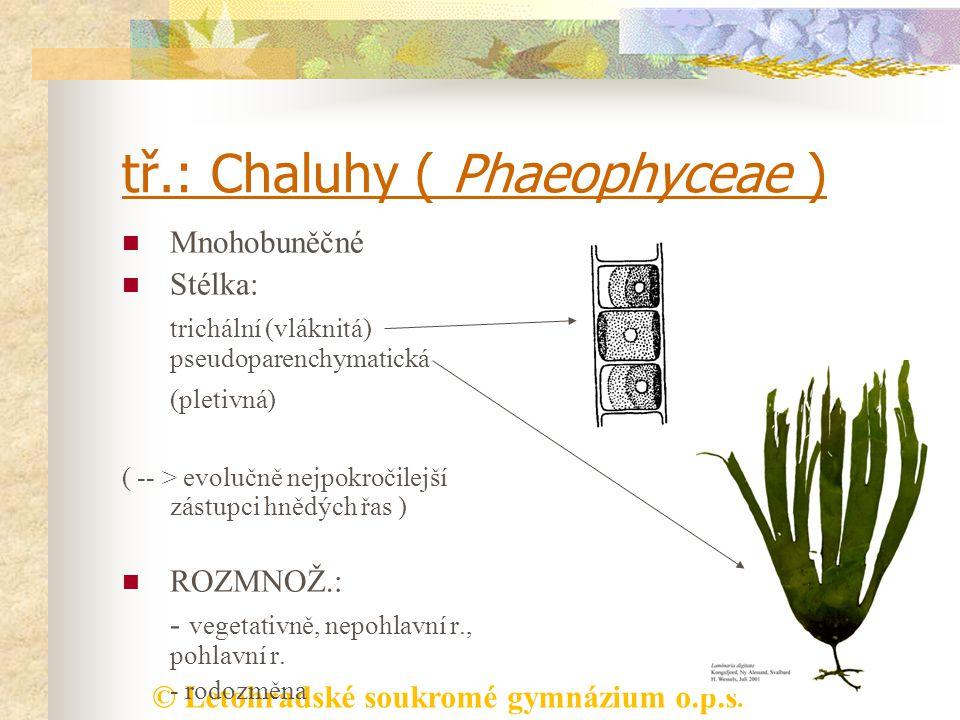 tř.: Chaluhy ( Phaeophyceae )