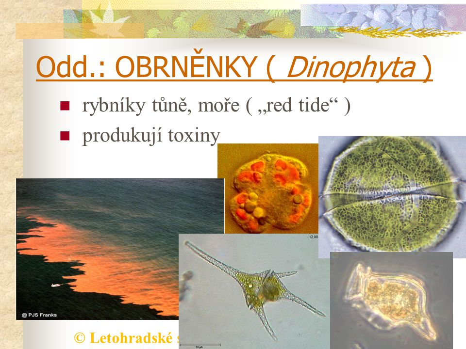 Odd.: OBRNĚNKY ( Dinophyta )