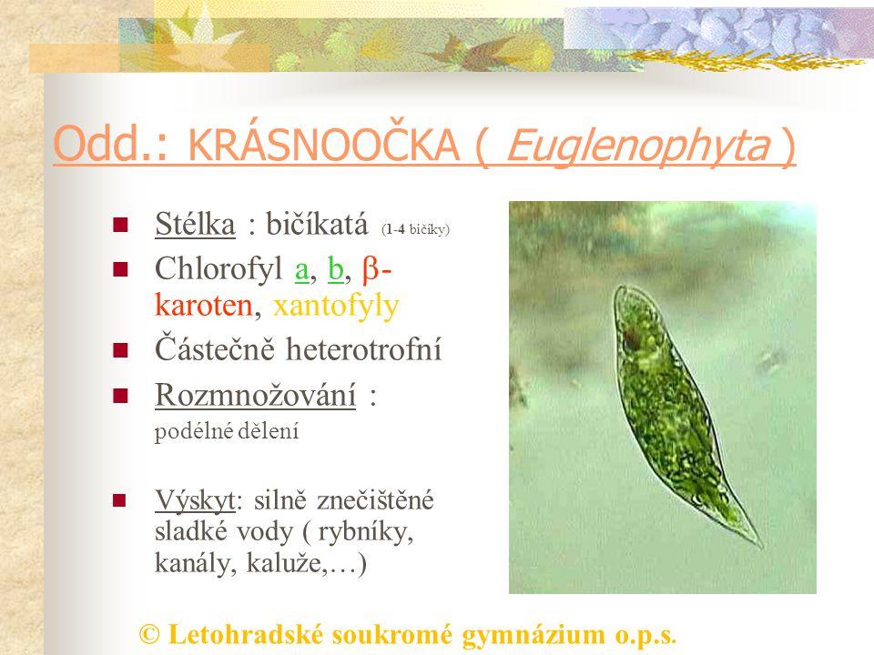 Odd.: KRÁSNOOČKA ( Euglenophyta )