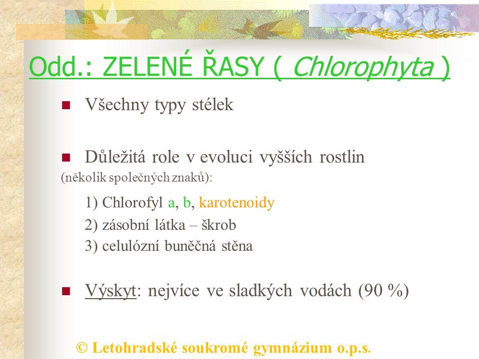 Odd.: ZELENÉ ŘASY ( Chlorophyta )