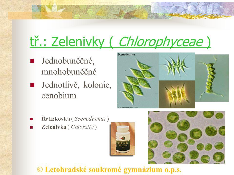 tř.: Zelenivky ( Chlorophyceae )