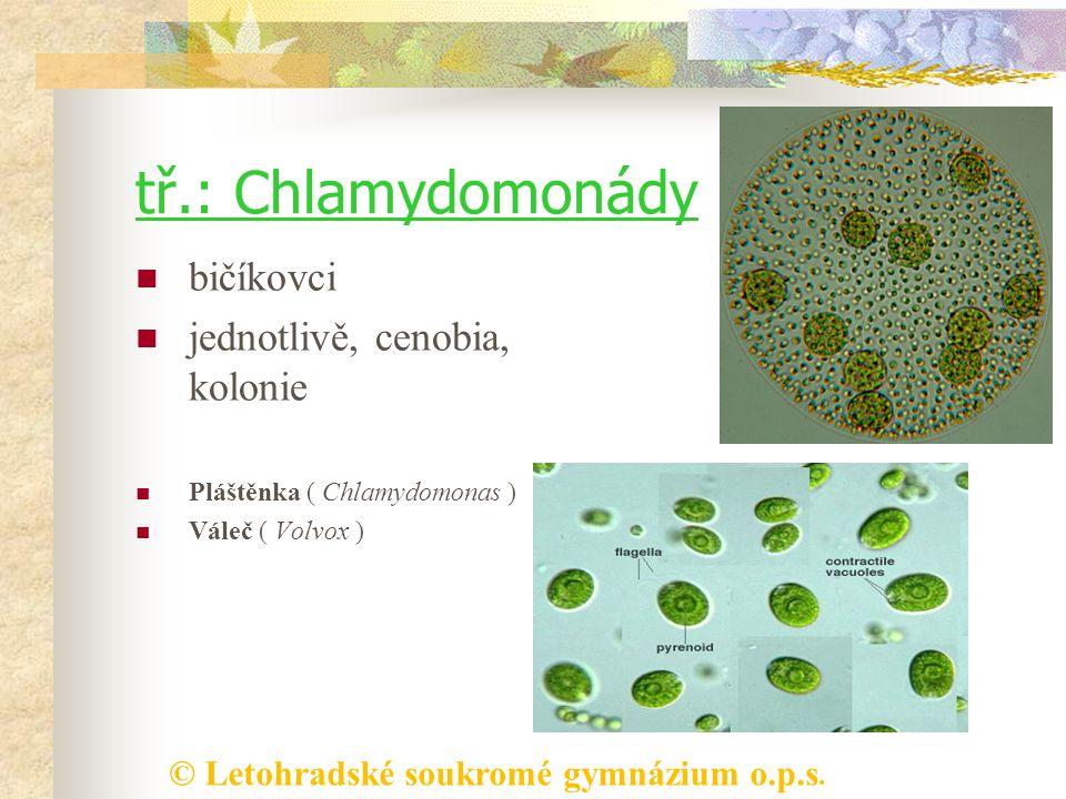 tř.: Chlamydomonády bičíkovci jednotlivě, cenobia, kolonie