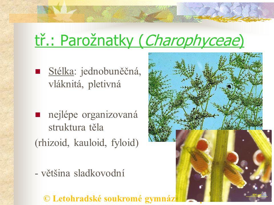 tř.: Parožnatky (Charophyceae)