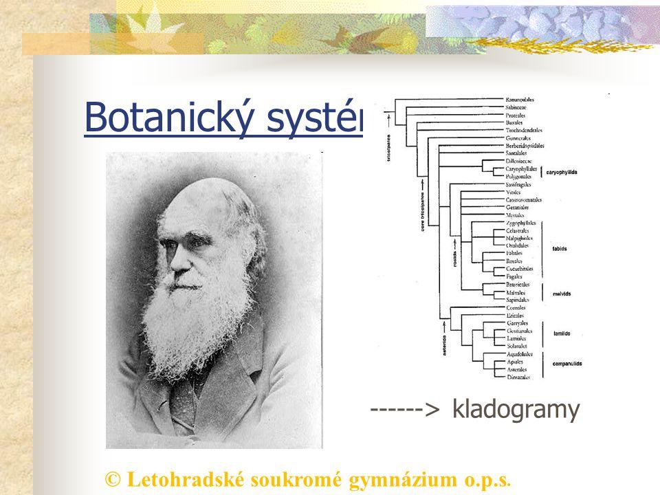 Botanický systém vznik fylogenetických systémů ------> kladogramy