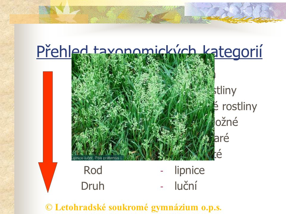 Přehled taxonomických kategorií
