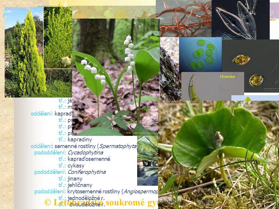 ŘÍŠE: rostlinná (Plantae) podříše: nižší rostliny